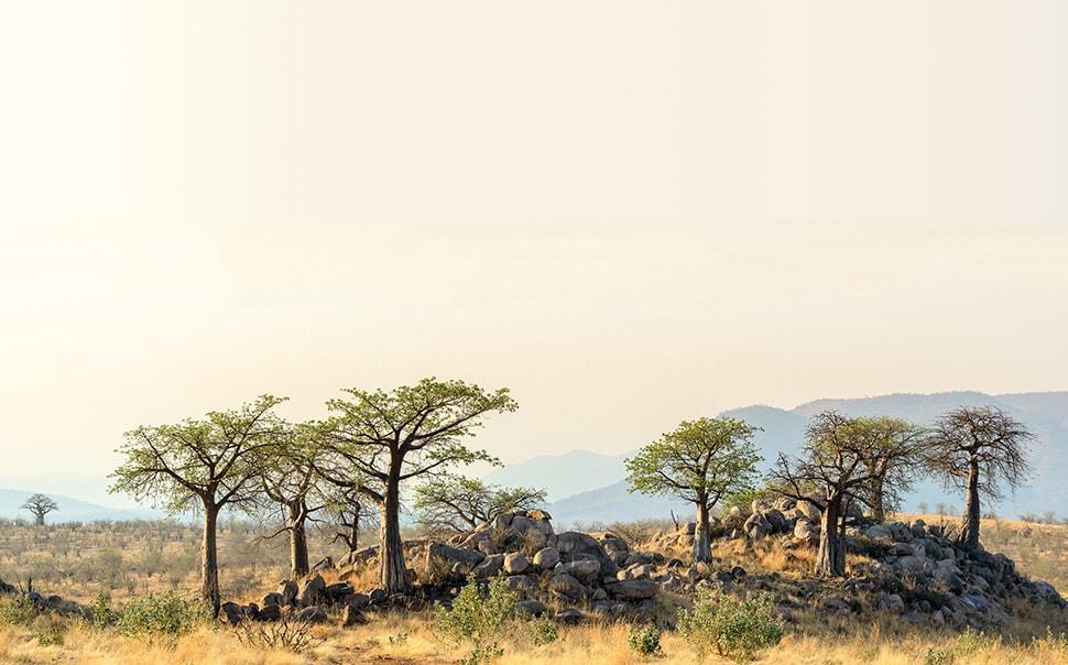 Safari in South Tanzania at the spectacular Jabali Ridge lodge Jabali Ridge landscape
