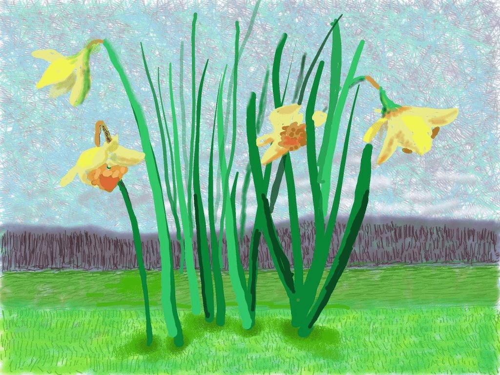 Daffodils by David Hockney