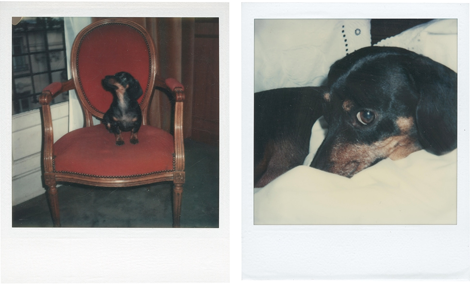 Photographs of Warhol's beloved Dachshunds, Archie and Amos