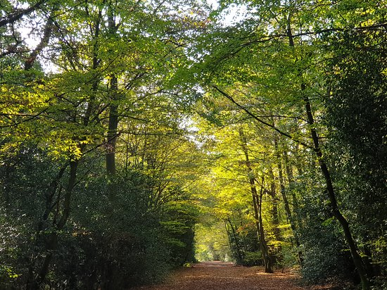 Ancient trees in Epping Forest, home to one of the best walks in London