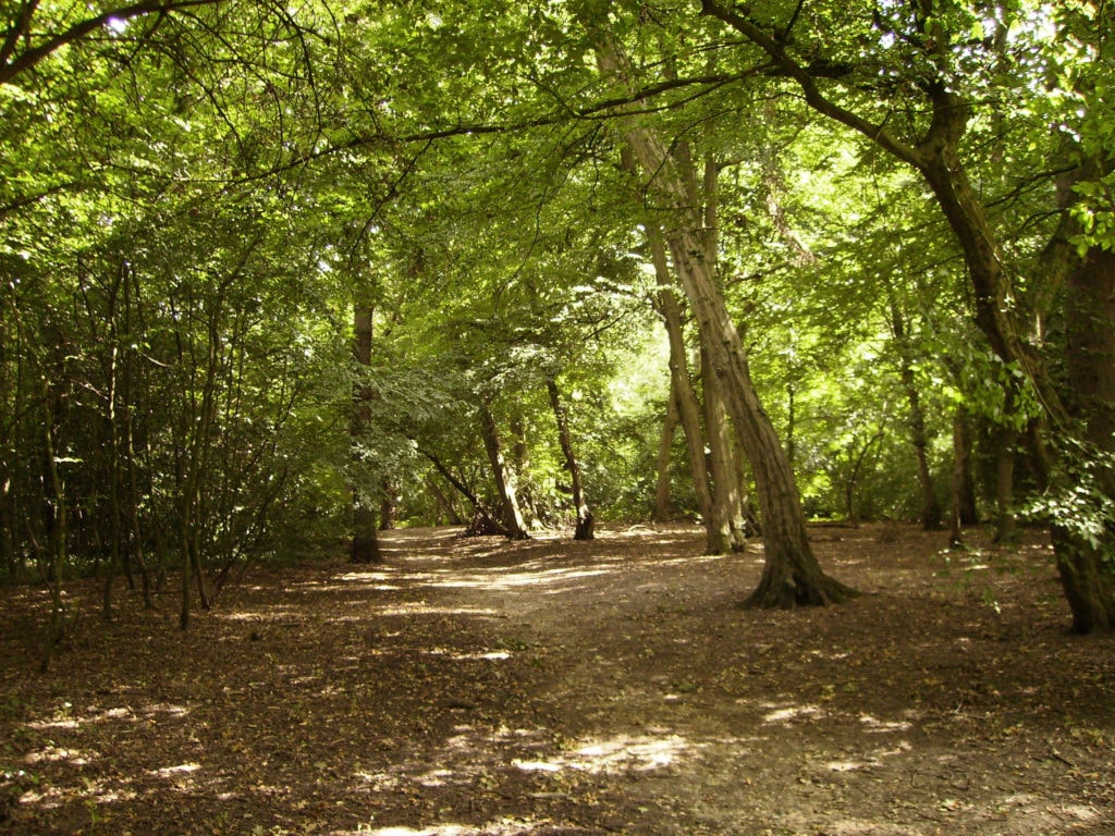 Trees in the ancient Highgate Woods