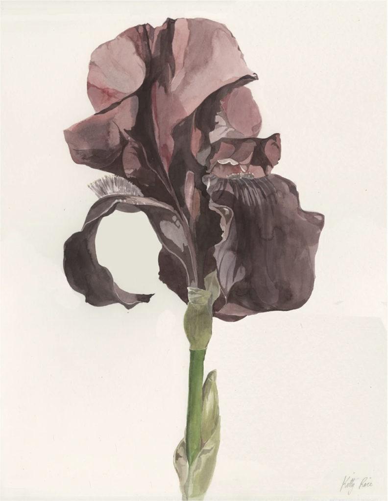 Kitty Rice Bearded Iris 2020