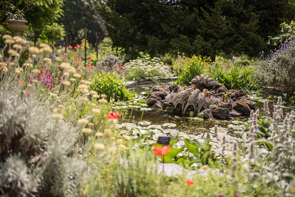 Chelsea Physic Gardens