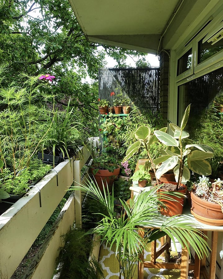 Urban gardening expert Alice Vincent shares her top tips for reconnecting with nature