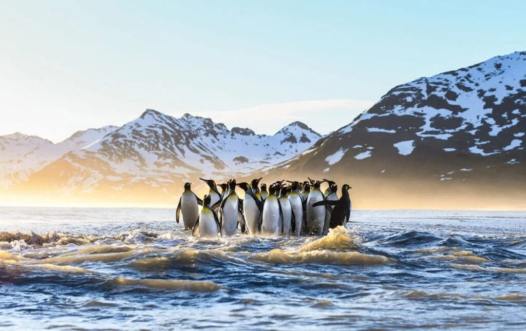 The best 15 ecological documentaries to stream right now