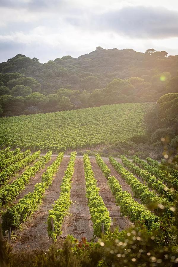 Chanel vue des vignes dune parcelle du Brice Braastad