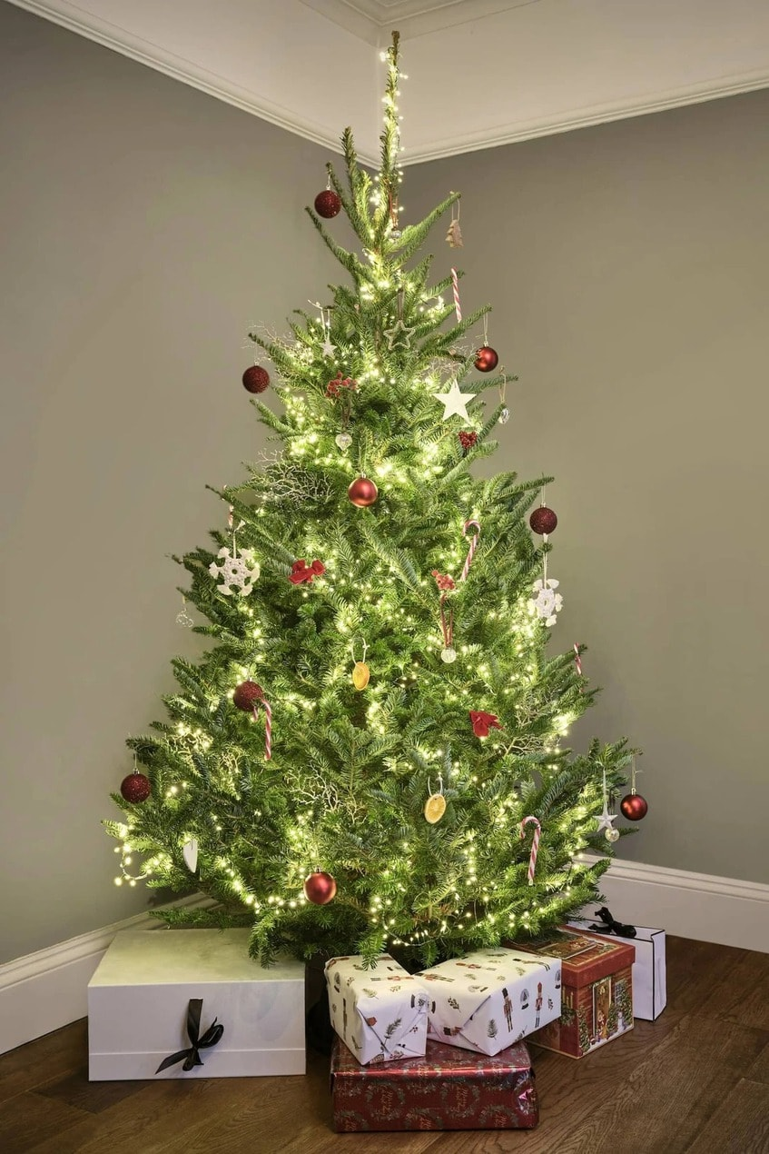 The 5 best ethical Christmas tree sellers in London to buy from Good Elf Christmas Tree 2