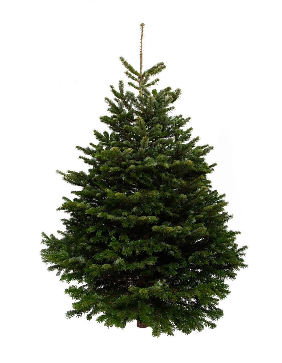 The 5 best ethical Christmas tree sellers in London to buy from The Christmas Forest