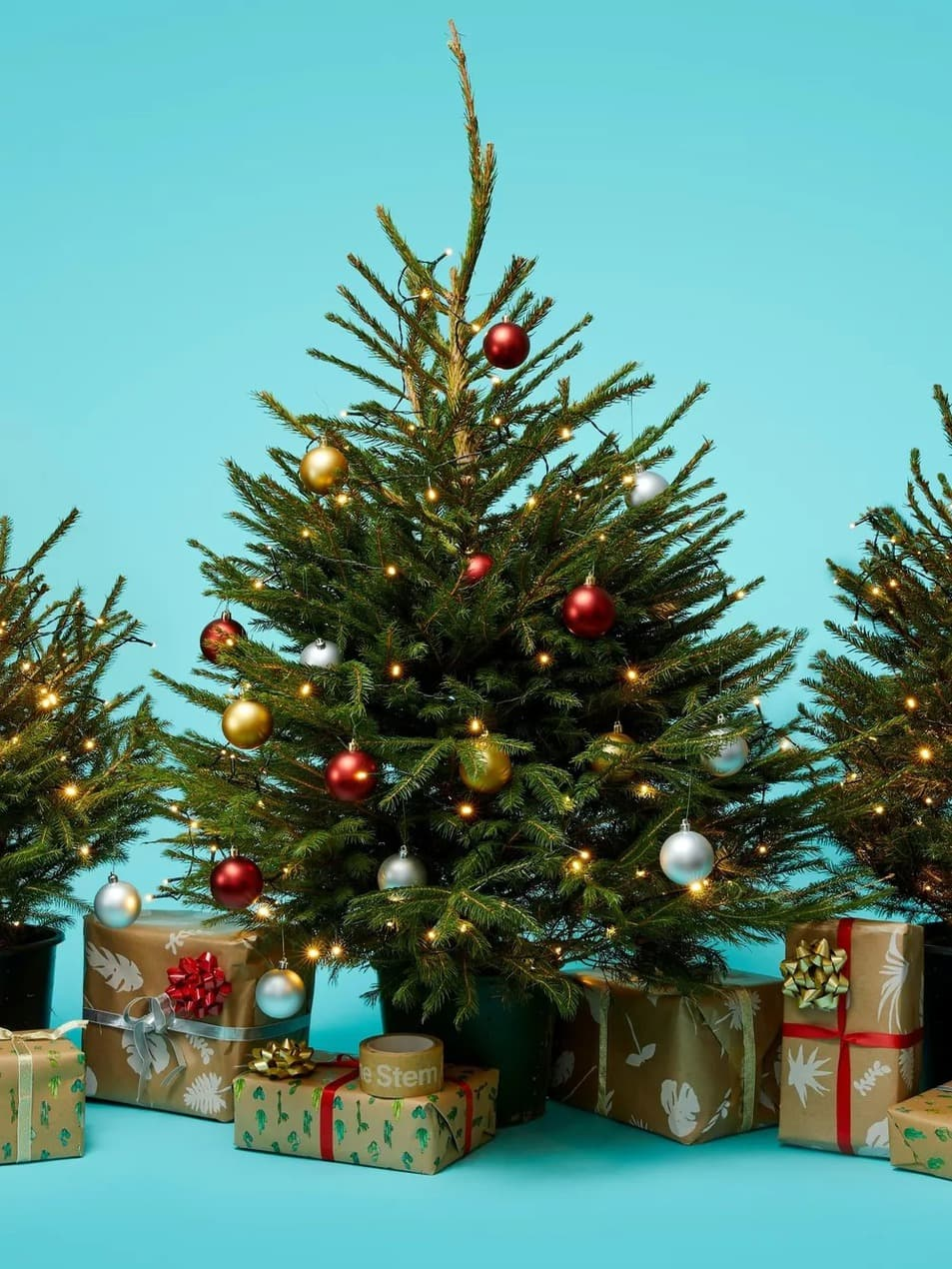 The 5 best ethical Christmas tree sellers in London to buy from The Stem Christmas Tree 2
