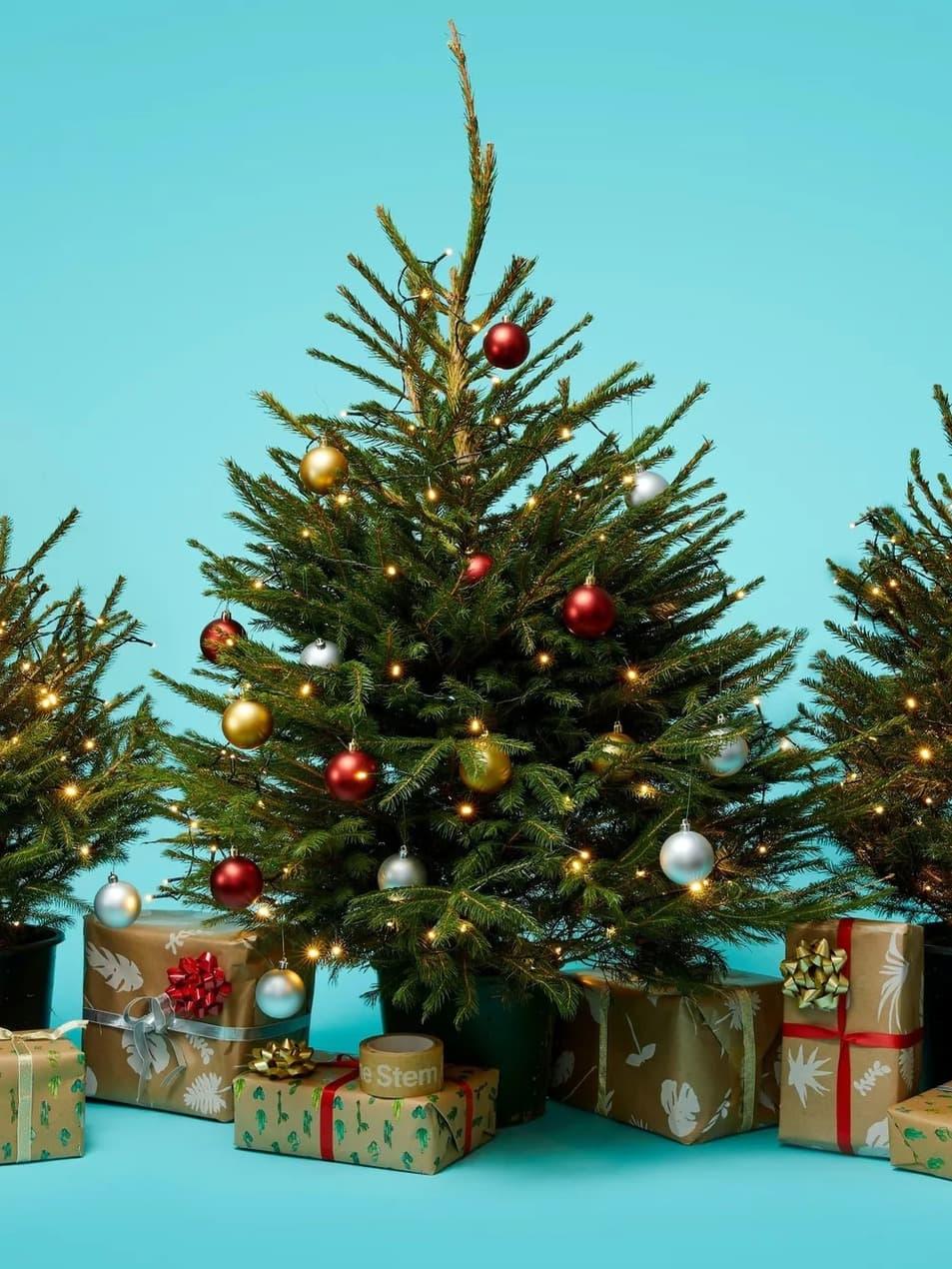 The Stem Christmas Tree 2